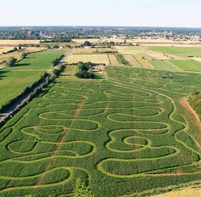 Labyrinthe de maïs